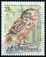 Cl: Little Owl (Athene noctua) SG 815 (2017)