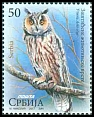Cl: Northern Long-eared Owl (Asio otus) new (2017)  [11/8]