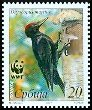 Cl: Black Woodpecker (Dryocopus martius) SG 290 (2007)