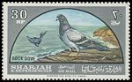 Cl: Rock Pigeon (Columba livia)(Repeat for this country)  SG 101 (1965) 95 [3/21]