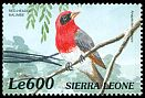 Cl: Red-headed Weaver (Anaplectes rubriceps)(Out of range)  SG 3108 (1999)
