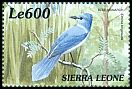 Cl: African Blue-Flycatcher (Elminia longicauda)(Repeat for this country)  SG 3116 (1999)