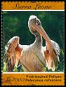 Cl: Pink-backed Pelican (Pelecanus rufescens)(I do not have this stamp)  SG 4789a (2012)  [8/2]