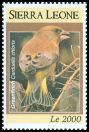 Cl: European Greenfinch (Carduelis chloris)(Out of range)  SG 4689a (2009)  [6/30]