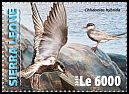 Cl: Whiskered Tern (Chlidonias hybridus)(I do not have this stamp)  new (2016)