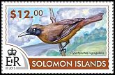 Cl: Black-throated Shrikebill (Clytorhynchus nigrogularis)(not catalogued)  (2015)