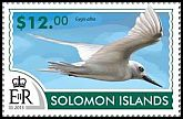Cl: White Tern (Gygis alba)(not catalogued)  (2015)