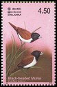 Cl: Black-headed Munia (Lonchura malacca) SG 1665 (2003)  [2/15]