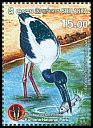 Cl: Black-necked Stork (Ephippiorhynchus asiaticus)(Repeat for this country)  new (2016)  [10/11]