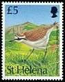 Cl: St. Helena Plover (Charadrius sanctaehelenae)(Endemic or near-endemic)  SG 647 (1993) 1000