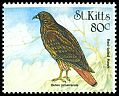 Cl: Red-tailed Hawk (Buteo jamaicensis) SG 525 (1999)