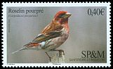 Cl: Purple Finch (Carpodacus purpureus) <<Roselin pourpr&eacute;>>  new (2016)  [10/6]