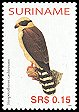 Cl: Laughing Falcon (Herpetotheres cachinnans) SG 2127 (2005) 30 [5/12]