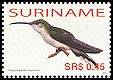 Cl: Grey-breasted Sabrewing (Campylopterus largipennis) SG 2162 (2006) 55 [5/23]