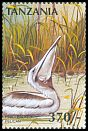 Cl: Pink-backed Pelican (Pelecanus rufescens)(Repeat for this country) (not catalogued)  (1997)