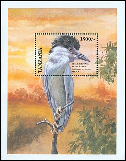 Cl: Black-crowned Night-Heron (Nycticorax nycticorax)(not catalogued)  (1999)