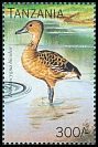 Cl: Fulvous Whistling-Duck (Dendrocygna bicolor)(not catalogued)  (1996)