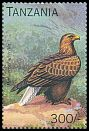 Cl: White-bellied Sea-Eagle (Haliaeetus leucogaster)(Out of range) (not catalogued)  (1996)