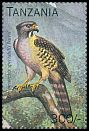 Cl: Congo Serpent-Eagle (Dryotriorchis spectabilis)(Out of range) (not catalogued)  (1996)