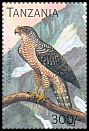 Cl: Madagascar Serpent-Eagle (Eutriorchis astur)(Out of range) (not catalogued)  (1996)
