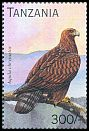 Cl: Golden Eagle (Aquila chrysaetos)(Out of range) (not catalogued)  (1996)