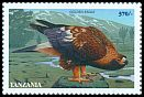 Cl: Golden Eagle (Aquila chrysaetos)(Out of range) (not catalogued)  (1998)