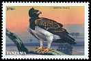 Cl: Martial Eagle (Polemaetus bellicosus)(not catalogued)  (1998)