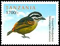 Cl: Yellow-rumped Tinkerbird (Pogoniulus bilineatus) new (2012)  [11/2]