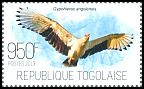 Cl: Palm-nut Vulture (Gypohierax angolensis) new (2013)  [9/13]