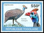 Cl: Helmeted Guineafowl (Numida meleagris) new (2010)  [6/58]