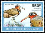 Cl: Greater Painted-snipe (Rostratula benghalensis) new (2010)  [6/58]