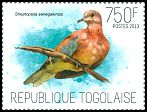 Cl: Laughing Dove (Streptopelia senegalensis) new (2013)  [9/15]