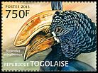 Cl: Black-and-white-casqued Hornbill (Ceratogymna subcylindricus) new (2013)
