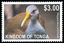Cl: Grey-necked Wood-Rail (Aramides cajanea)(Out of range)  SG 1629 (2012)  [5/23]