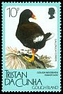 Cl: Tristan Moorhen (Gallinula nesiotis) <<Island Cock>> (Endemic or near-endemic)  SG 474 (1989) 20