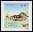 Cl: Marbled Teal (Marmaronetta angustirostris) <<Sarcelle marbree>>  SG 1589 (2004)  [3/31]