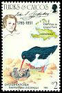 Cl: American Oystercatcher (Haematopus palliatus)(Repeat for this country)  SG 833 (1985)