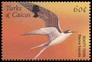 Cl: Sooty Tern (Sterna fuscata)(Repeat for this country)  SG 1743 (2002)