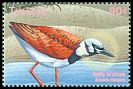Cl: Ruddy Turnstone (Arenaria interpres) SG 987 (2000)