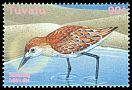 Cl: Sanderling (Calidris alba) SG 988 (2000)