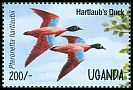 Cl: Hartlaub's Duck (Pteronetta hartlaubii)(Out of range)  SG 1444 (1995)