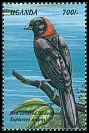 Cl: Red-collared Widowbird (Euplectes ardens) SG 2107 (1999)