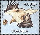 Cl: Egyptian Vulture (Neophron percnopterus)(Repeat for this country) (not catalogued)  (2013)
