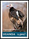 Cl: White-headed Vulture (Trigonoceps occipitalis)(I do not have this stamp)  new (2014)