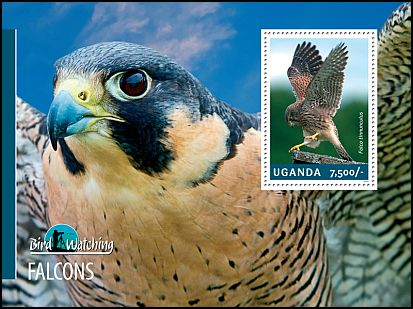 Cl: Eurasian Kestrel (Falco tinnunculus)(I do not have this stamp)  new (2014)
