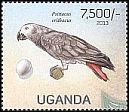 Cl: Grey Parrot (Psittacus erithacus)(Repeat for this country) (not catalogued)  (2013)