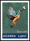 Cl: Common Kingfisher (Alcedo atthis)(Out of range) (I do not have this stamp)  new (2014)