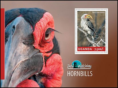 Cl: Southern Yellow-billed Hornbill (Tockus leucomelas)(Out of range) (I do not have this stamp)  new (2014)