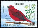 Cl: Hepatic Tanager (Piranga flava) <<Fueguero>>  SG 3103 (2008) 525 [4/53]