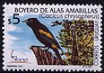 Cl: Golden-winged Cacique (Cacicus chrysopterus) SG 2633 (2000) 250 [1/3]